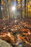 Accotink-Park Lizenzfreies Stockfoto