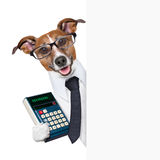 Accountant dog. Behind blank page wearing a suit royalty free stock images