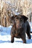 Accouplement de chasse Images libres de droits