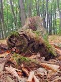 Accroc dans la forêt Images libres de droits