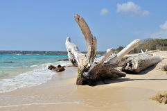 Accroc sur la plage Photos stock