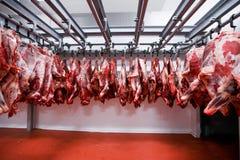 Accroché frais de demi gros morceaux de boeuf et arrangé dans une rangée dans un grand réfrigérateur dans l'industrie de viande d photo stock