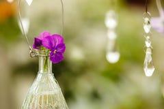 Accrochant fleurit dans le pot de fleurs en verre, décoration floristry Photographie stock