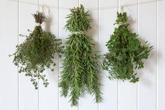Accrocher frais d'herbes Photos libres de droits