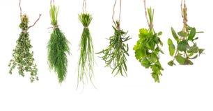 Accrocher frais d'herbes image libre de droits