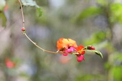 Accrocher la fleur jaune et orange photo stock