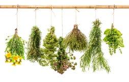 Accrocher sain frais d'herbes d'isolement sur le fond blanc Images libres de droits