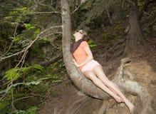 Accrocher sur un arbre image libre de droits