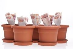 Accroissement d'argent image stock