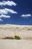 Accroissement d'environnement extrême Photo libre de droits