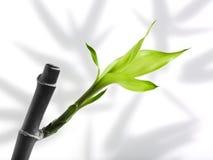 Accroissement vert image libre de droits