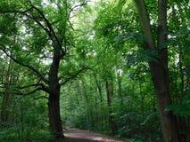 Accueil à la forêt Photos libres de droits
