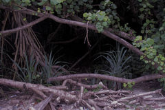 Accueil à la jungle Image libre de droits