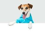 Accueil du terrier de Jack Russell de chien Photos libres de droits