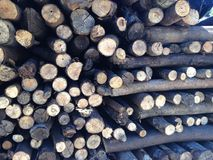 Accumulated Firewood Royalty Free Stock Photography