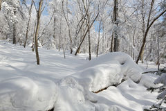 The accumulated snow in the forest. The photo was taken in Helong city Jilin province, China Stock Photos