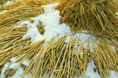 Accumulated Snow Rice Paddy Hat Royalty Free Stock Photo