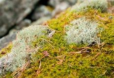 Accumulatie van mos op de rotsen Stock Afbeelding