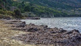 Sea algae on the beach Stock Images