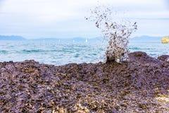 Sea algae on the beach Stock Image