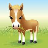 Accumulazione animale del bambino: Cavallo Immagini Stock