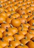 Accumulazione arancione luminosa della zucca fotografia stock