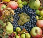 Accumulazione asciutta della frutta e del fiore Fotografia Stock Libera da Diritti