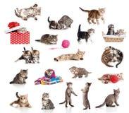 Accumulazione attiva dei gattini isolata su bianco Fotografia Stock Libera da Diritti