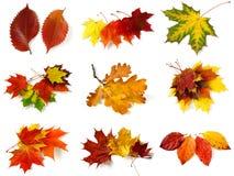 Accumulazione d'autunno dei fogli Fotografie Stock