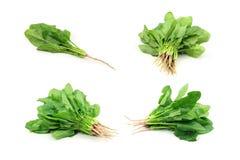 Accumulazione degli spinaci Immagine Stock Libera da Diritti