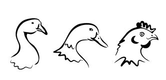 Accumulazione degli uccelli dell'azienda agricola dei simboli Fotografie Stock Libere da Diritti