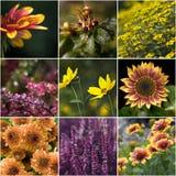 Accumulazione dei fiori d'autunno Fotografie Stock