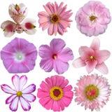 Accumulazione dei fiori dentellare Immagini Stock Libere da Diritti