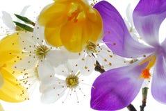 Accumulazione dei fiori variopinti Fotografie Stock Libere da Diritti