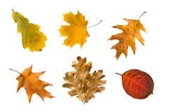 Accumulazione dei fogli di autunno Immagini Stock