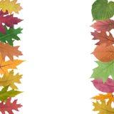 Accumulazione dei fogli di autunno Fotografie Stock