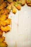 Accumulazione dei fogli di autunno Immagine Stock