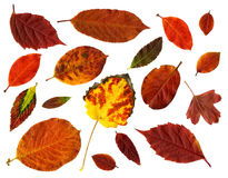 Accumulazione dei fogli di autunno isolati su bianco Fotografia Stock Libera da Diritti