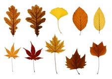 Accumulazione dei fogli di autunno isolati su bianco Fotografia Stock