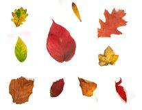 Accumulazione dei fogli di autunno su priorità bassa bianca Immagini Stock
