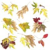 Accumulazione dei fogli di autunno su priorità bassa bianca Fotografia Stock Libera da Diritti