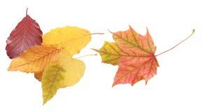 Accumulazione dei fogli di autunno su priorità bassa bianca Fotografie Stock