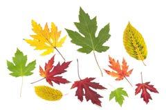 Accumulazione dei fogli di autunno variopinti Fotografia Stock