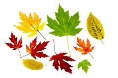 Accumulazione dei fogli di autunno variopinti Immagine Stock