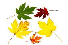 Accumulazione dei fogli di autunno variopinti Fotografie Stock Libere da Diritti