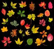 Accumulazione dei fogli di autunno variopinti Immagini Stock Libere da Diritti