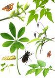 Accumulazione dei fogli e degli insetti di verde Immagine Stock Libera da Diritti