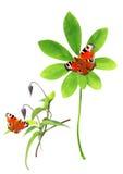 Accumulazione dei fogli e della farfalla di verde Fotografia Stock Libera da Diritti