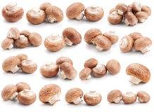 Accumulazione dei funghi freschi su bianco Fotografia Stock Libera da Diritti