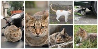 Accumulazione dei gatti Immagine Stock
